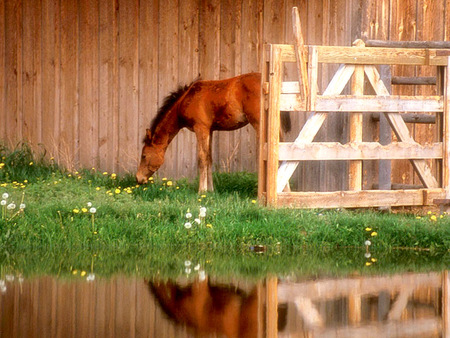 spring wild horse wallpaper - photo #35