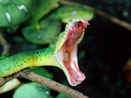 Green Snake Dangerous - green, snake, reptiles, animals, dangerous
