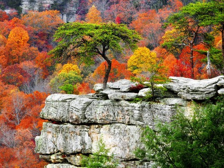 Color Rock - branches, cool, rocky, gray, nice, nature, trees, mountains, scarlet, background, yellow, natural, colors, stones, red, pink, rocks, black, purple, colorful, trunks, autumn, green, fullscreen, orange, awesome, scarlat, plants, view, white, leaf, wallpaper, leaves, violet, peaks, beautiful, desktop, amazing, mounts, multicolor, seasons