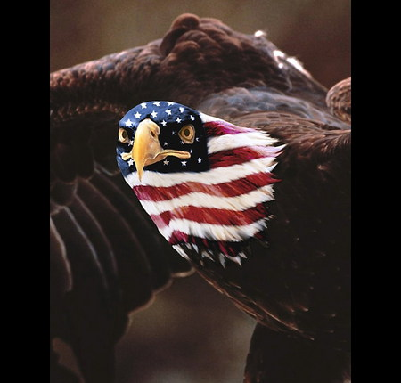 USA Patriot Eagle - animals, usa, eagles, birds, flag