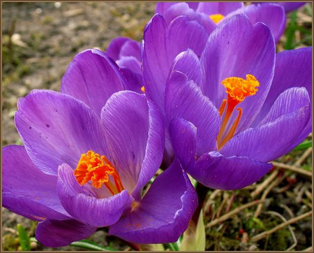 early spring flowers amp nature background wallpapers on