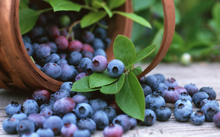 Basket with Blueberries - fruits, berry, blue, delicious, blueberries