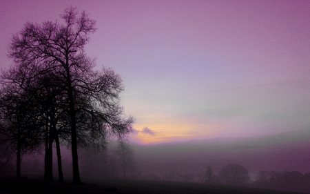 Purple morning - amazing, calming, mysterious, blue, mystic, purple, fairy, awesome, sunrise, trees, gorgeous, other, light, foggy, fields, peaceful, winter, dreamy, cool, morning, beautiful, mist, twilight, tree, beauty, landscape, cold, grass, fog, myst, field, sky, country, photography, morning mist, nature, sun