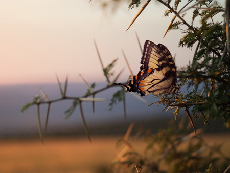 Beautiful Butterfly - butterflies, animals, trees, beautiful
