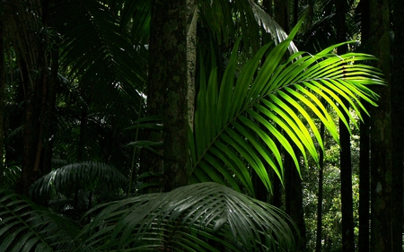 Rainforest Frond - rain, green, trees, nature, forest