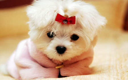 Sweet Puppy - Dogs & Animals Background Wallpapers on Desktop ...