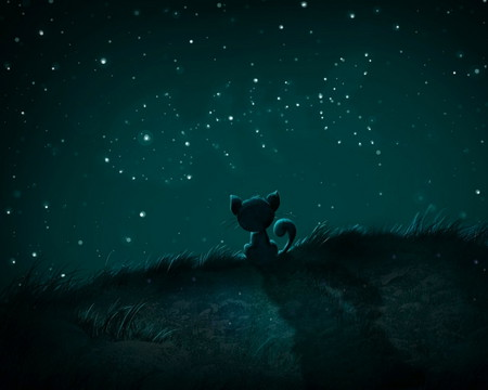 Dreams - stars, cat, night, fish