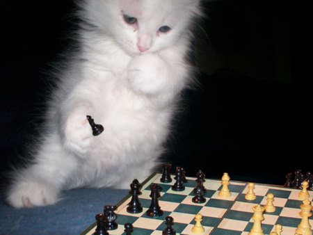 A KITTY PLAYING CHESS really smart - cute, adorable, smart, kitten