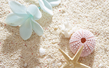 Shells - flowers, pearls, beautiful, pink, colors, blue, lovely, sand, beach, photography, white, nature, shells, shell