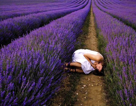 Relaxing lavender - Other & People Background Wallpapers ...  Relaxing lavend...