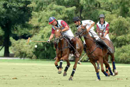 Polo Riding - match, horses, riding, polo ponys