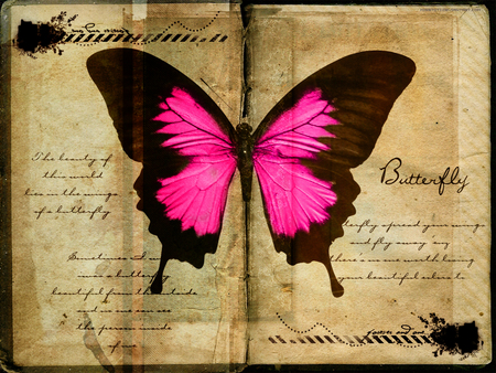 Butterfly pages - butterfly, butterfly quotes, pages, black, pink, book