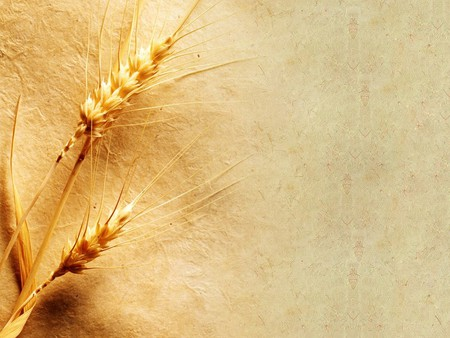 wheat grain - Grain Wallpaper