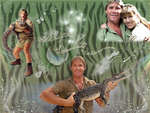 Crikey - it's the Crocodile Hunter