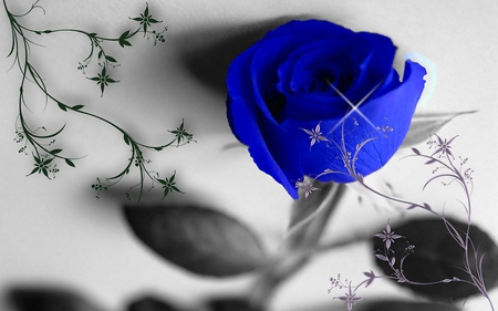 BLUE ROSE - rose, flower, design, blossom, photoshop, blue