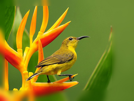 ......... Bird............. - green, flower, animals, bird, nature, yellow