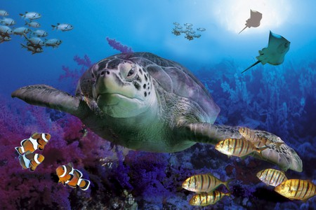MARINE LIFE - Other & Animals Background Wallpapers on Desktop ...