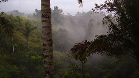 Morning Mist - green, beautiful, rainforest, mist, mountain