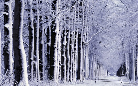 The snowy alley - alley, trees, snow, park