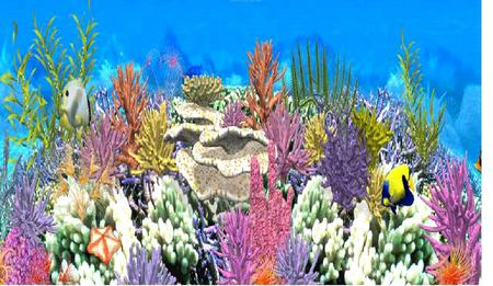 Tropical ocean animals and plants - photo#28