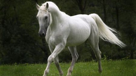 White horse - green, horse, white, black