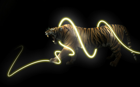light tiger 3d and cg amp abstract background wallpapers