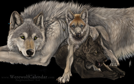 LOKI THIS ONES FOR YOU MY FRIEND - photo, wolves, gorgeous, beautiful