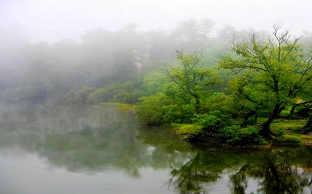 MISTY LAKE - reflections, lake, green, fog, mist, trees, shadow
