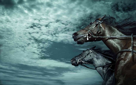 CHASE THE CLOUDS - skies, running, clouds, stallions, black, horses