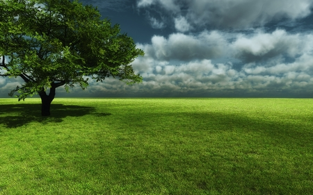 Endless Green - green, storm, field, grass, nature, tree, dark clouds