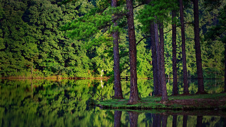 Beautiful Forest - green, water, trees, reflection, rainforest, nature, forest