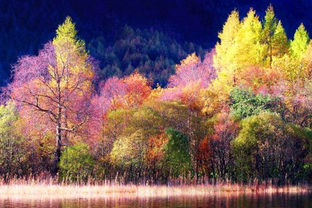 Scottish beauty - green, multicolored, thres, trees, pink, colors, pretty, yellow, coral, forest, nature, scotland
