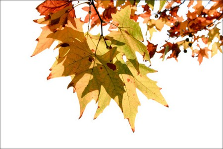 colorful leaves - leaves, colorful, colors, fall, autumn