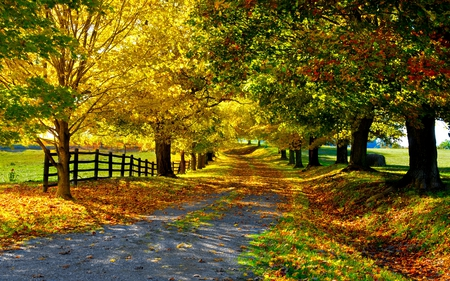 autumn-road - trees, road, shade, wonderful, path, tree, fall, autumn, leaves, fence, grass, red