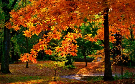 Autumn Colors - splendor, glow, wood, beautiful, path, view, beauty, fall, autumn, water, walk, forest, red, colours, woods, green, rays, trees, rest, colorful, colors, lovely, sunlight, branches, leaves, autumn colors, sunny, park, nature, peaceful, shine