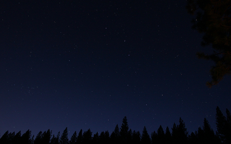 Nature's Nightlights - skies, night, stars, forest, sky, clear, nature
