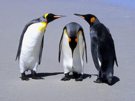 penguins - penguin, talking, baby, penguins