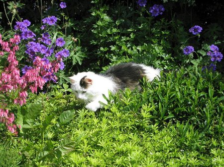 what will keep cats away from flower beds