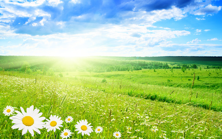 Daisies - flowers, beautiful, landscape, flower, grass, green, daisies, trees, field, sky, paradise, clouds, sunny, nature, sun, peaceful, fields, daisy