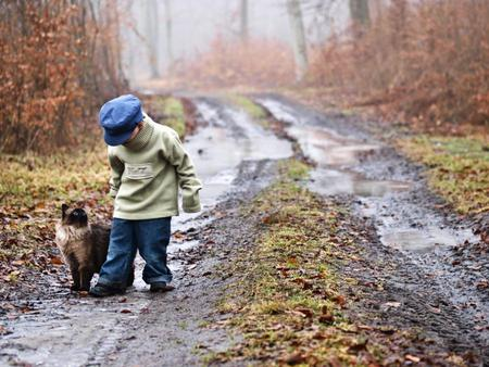 Can we Go Home Boss ? - boy, little, way, cat, forest