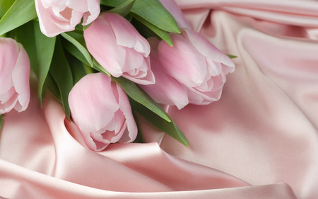 Pink Tulips - flowers, petals, beautiful, best, pink, pretty, soft colour, beauty, wallpapers, flower, silk, tulip, delicate, lovely, tulips, satin, petal, pink tulips, photography, hd, still life, nature, bouquet