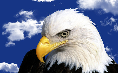 Eagle - clouds, eagle, eyes, blue