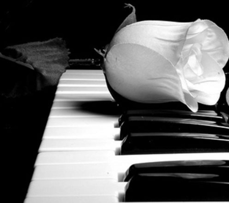 rose and piano - rose, piano, music, white