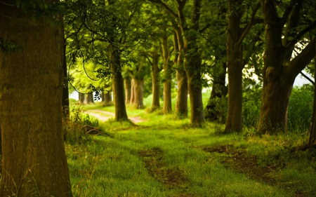 Path In The Forest - wallpaper, woods, peaceful, beauty, forest, path, nature, trees, grass, road, beautiful, green