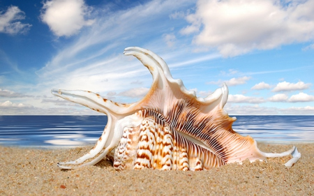 Shell - summer, beautiful, sky, beauty, sand, beach, clouds, sea, nature, peaceful, shells, ocean, shell