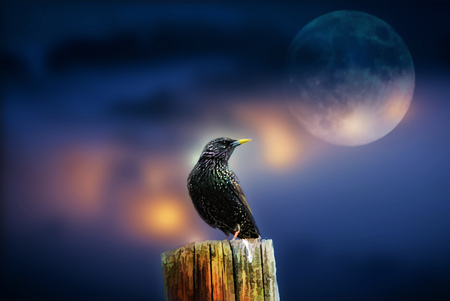 Full moon - Birds & Animals Background Wallpapers on ...
