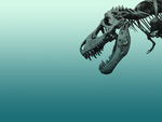 A Dinosaur skull wallpaper