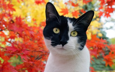 You have my Attention - ears, whiskers, flowers, black, cat, white, animal