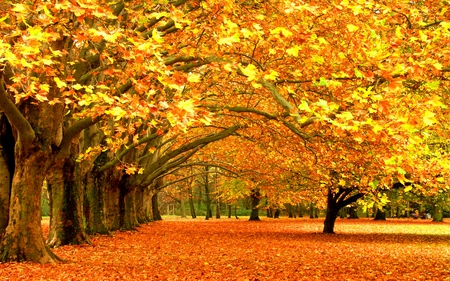 Autumn - splendor, leafs, amazing, beautiful, orange, path, view, beauty, autumn, yellow, landscape, golden autumn, grass, forest, alley, trees, colors, lovely, september, carpet, golden, leaves, autumn colors, falling leaves, park, nature, peaceful