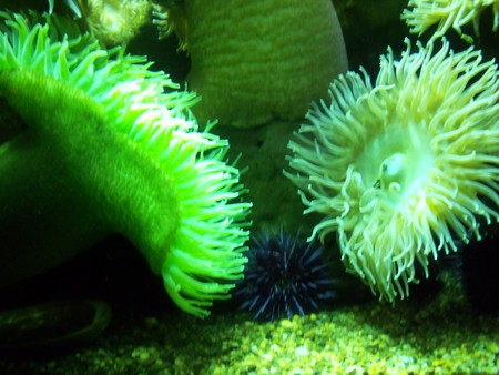 Coraly things - green, water plants, coral, water